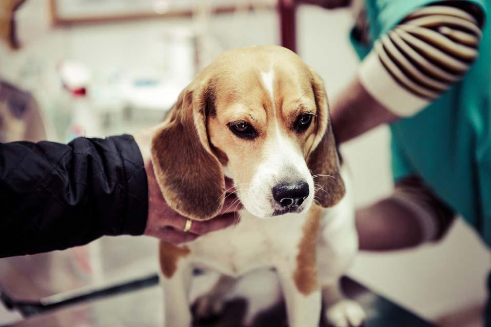 calendario-vacunas-perros