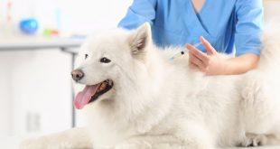 vacunas-para-perros