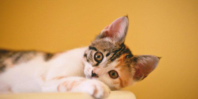 omederos-automaticos-para-gatos
