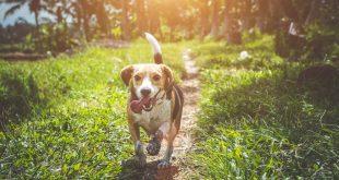perros-adoran-el-sol