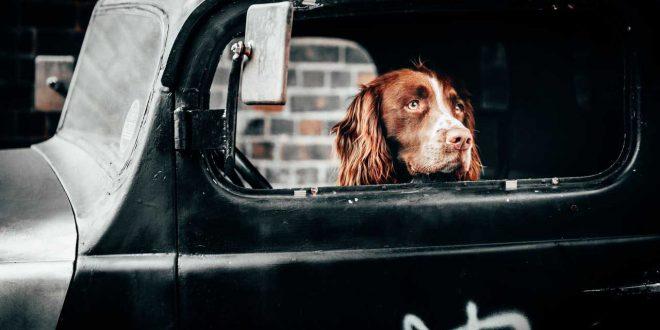 perro-encerrado-en-coche