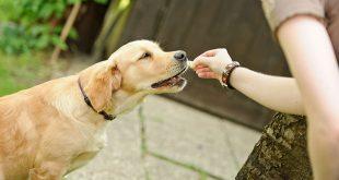 cuanta-comida-dar-a-tu-perro