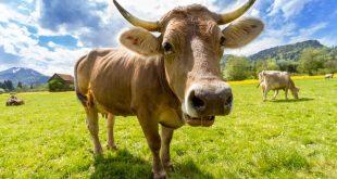 proteccion-animales-de-granja