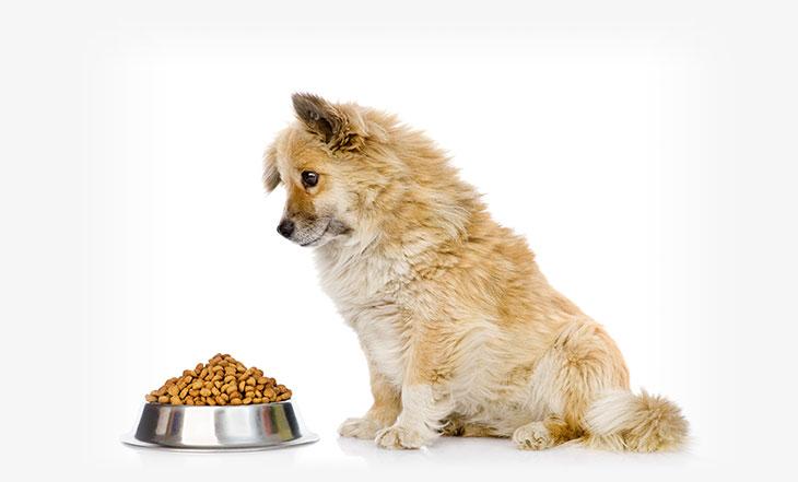 racion-de-comida-perro-adulto