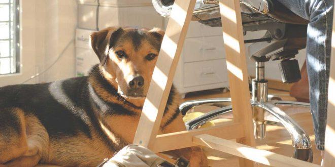 desahucios-viviendas-mascotas