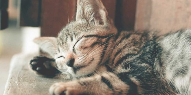 plan-de-salud-para-mascotas