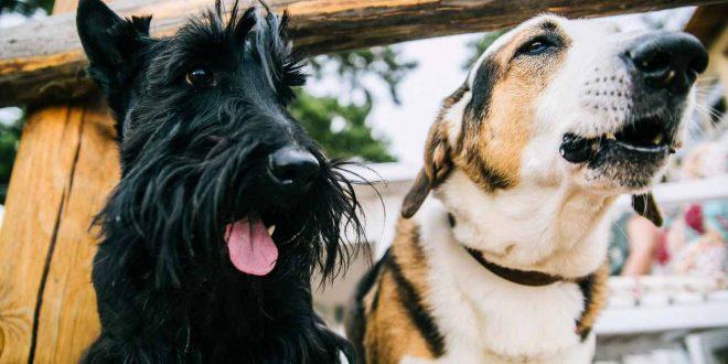 anteproyecto-ley-bienestar-animal