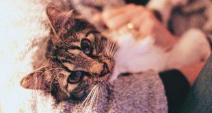 bienestar-animal-proteccion-mascotas