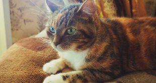 pienso-sin-cereales-gatos-esterilizados