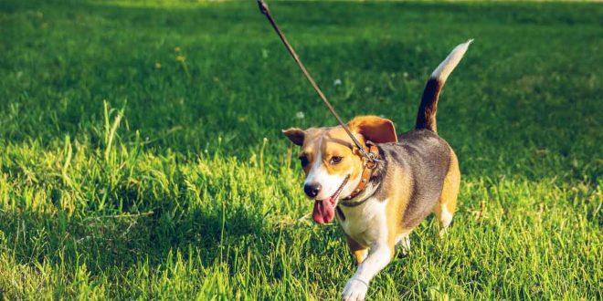 coronavirus-pasear-a-tu-perro