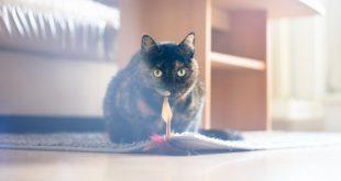 como-elegir-casa-para-gatos