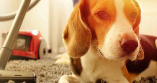 limpieza-segura-casa-con-mascotas