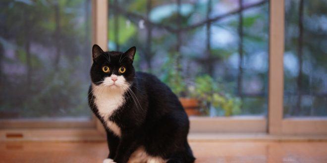 proteger-gato-caidas-balcon