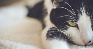 como-alimentar-a-un-gato-mayor