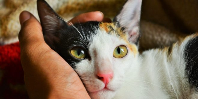 coronavirus-felino
