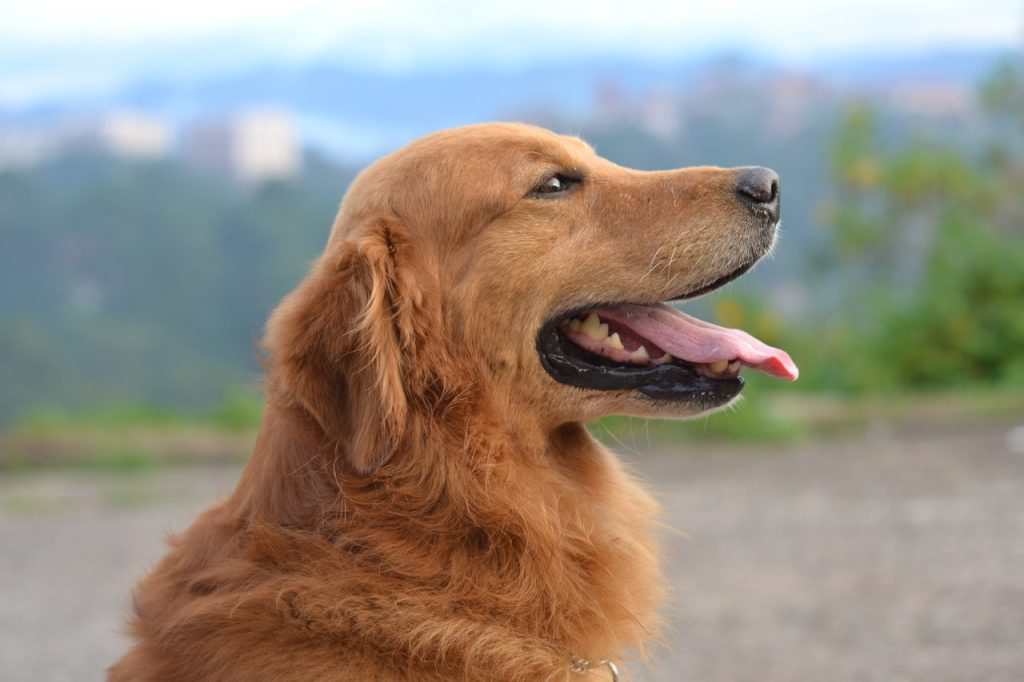 esterilizacion-reversible-perros