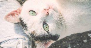razones-para-adoptar-un-gato