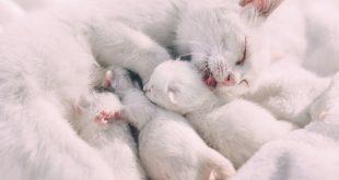 destetar-a-los-gatitos