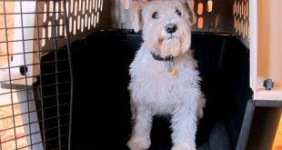 como-preparar-al-perro-para-el-transportin