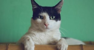 enseñar-a-un-gato-a-usar-el-arenero