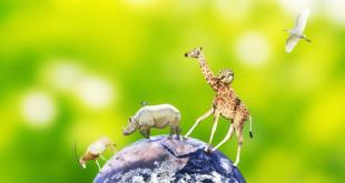 Dia-mundial-derechos-animales