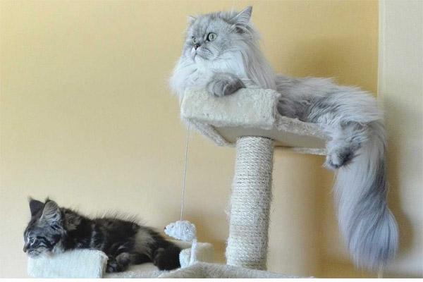 como-enseñar-a-tu-gato-a-usar-el-rascador