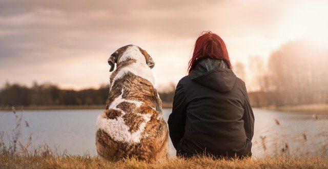 importancia-de-adoptar-una-mascota