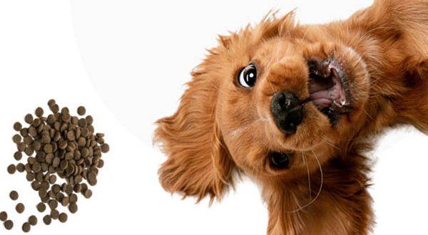 pamipe-pienso-personalizado-para-perros