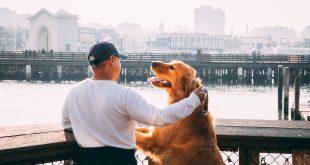 esterilización-canina-mitos