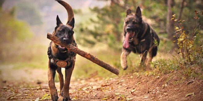 subasta-perros