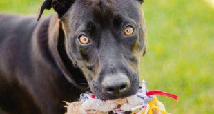 perros-potencialmente-peligrosos-cambio-ley