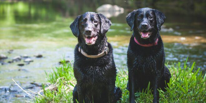 prevenir-leishmaniosis-en-perros