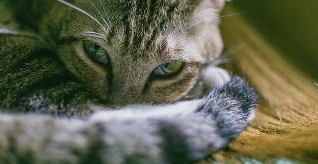 proyecto-donalo-ayuda-a-los-animales
