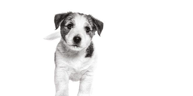 mascotas-paradores-royal-canin