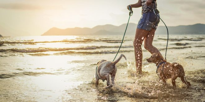 dia-de-playa-con-tu-perro