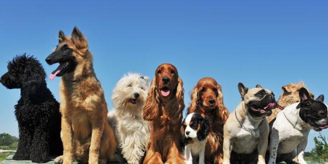quiero-trabajar-con-perros
