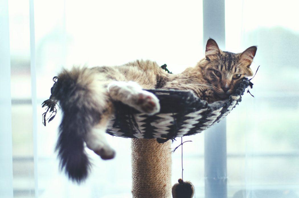 enriquecer-el-ambiente-de-tu-casa-para-tu-gato