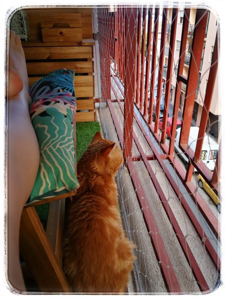 enriquecimiento-para-gatos-estimulos-visuales