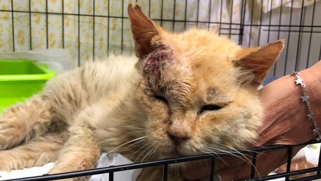 gato-afectado-por-el-volcan-de-la-palma